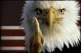 eaglebird